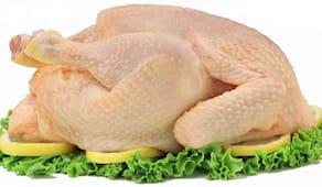 Pollo intero al kg