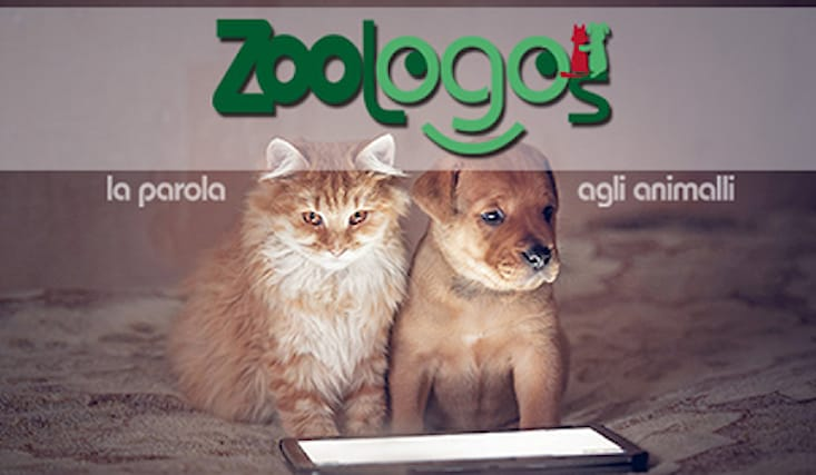 Zoologos-shopping-card_162327