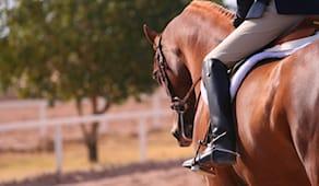 3lez.cavallo ranch regalo