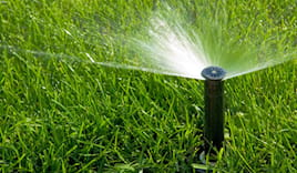 - 20% su irrigazione