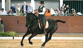 5h working equitation