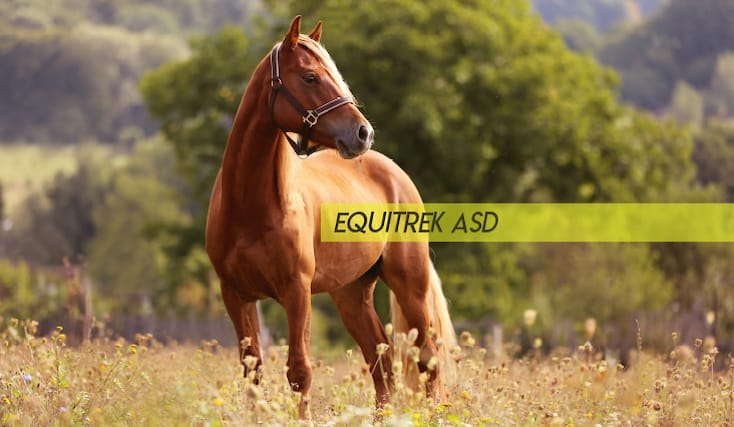 Equitrek-shopping-card_173436
