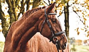Lezione cavallo regalo