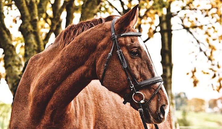 Lezione-cavallo-regalo_168769
