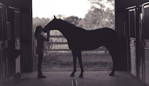 2 ore con i cavalli