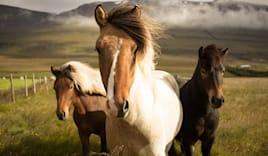 10 lezioni a cavallo