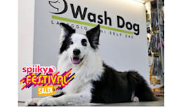 40% sconto wash dog ⭐