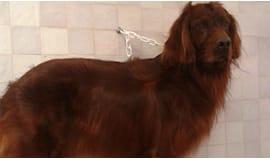 Toelettatura cani medi