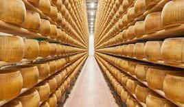 Parmigiano regg. bio 24 m