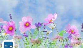 Rimedi floreali online