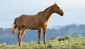 Passeggiata a cavallo x2