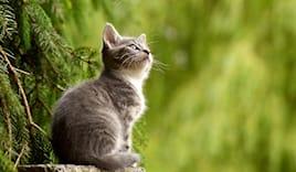 Bagno gatto pelo corto