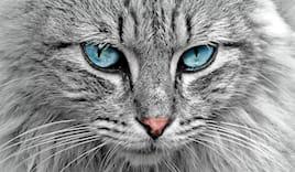Bagno gatto pelo lungo