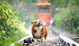 Toelettatura cane