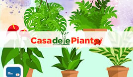 Casa piante shopping card
