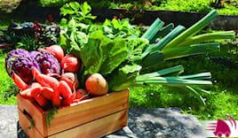 Cesta frutta+verdura 15kg