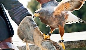 Esperienza falconeria X2