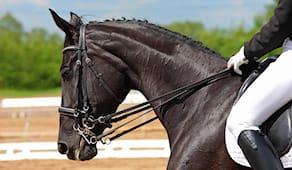 5 lezioni equitazione