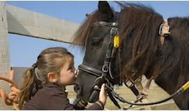 Laboratori di equitazione