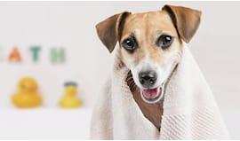 Lavaggio cane 2-15 kg