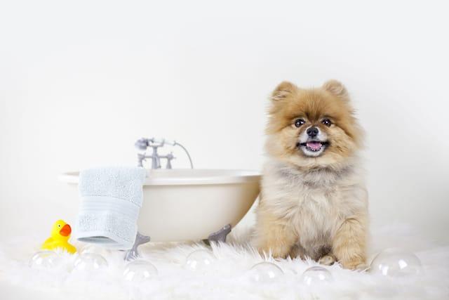 Lavaggio-cane-215-kg_88852