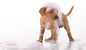 Lava il tuo cane gratis!