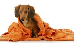 Autolavaggio cane small