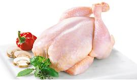 Pollo allevato a terra