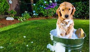 Lavaggio cane 16-25kg