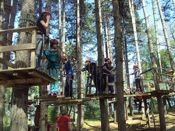 Jump-tree-adventures_89946