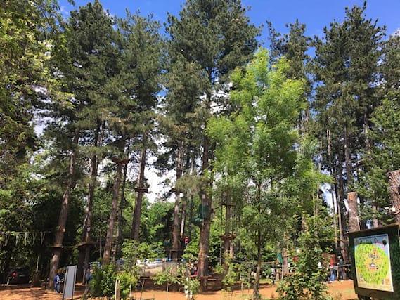Jump-tree-adventures_89967
