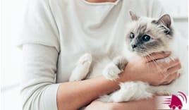 CAT SITTER 3 GIORNI