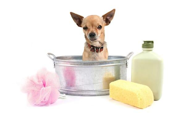 Lavaggio cane taglia mini
