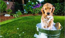Lavaggio cani taglia medi