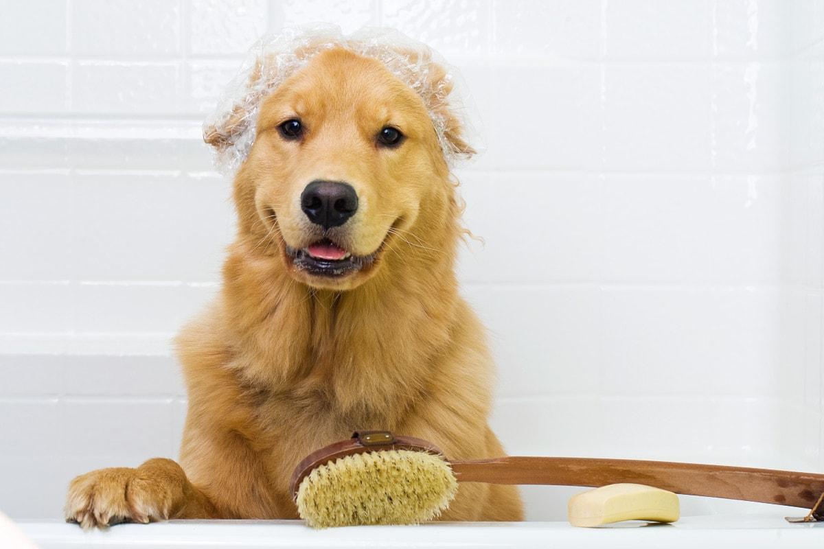 Lava il tuo cane!