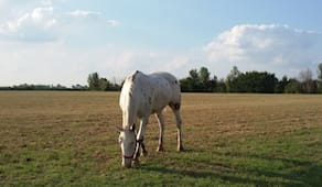 3 lezioni di equitazione