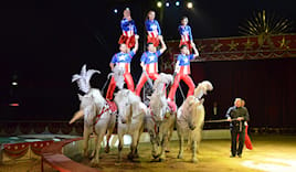 American circus platea