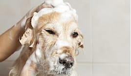 Lavaggio tosatura meticci