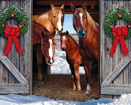 5-lezioni-equitazione_144477