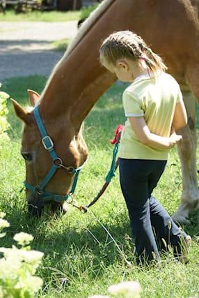 5-lezioni-equitazione_100806