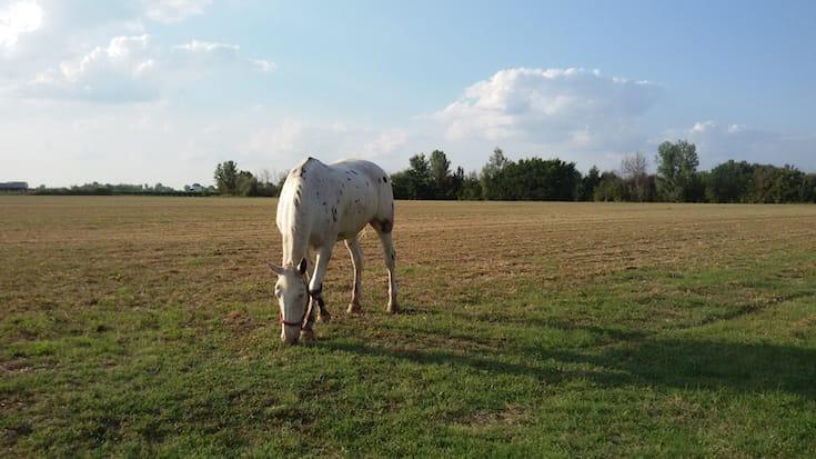 5-lezioni-equitazione_100808