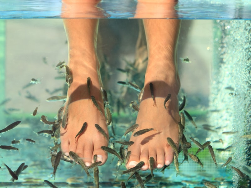 Fish pedicure a 4,90€