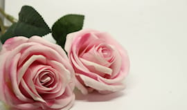 12 rose per chi ami