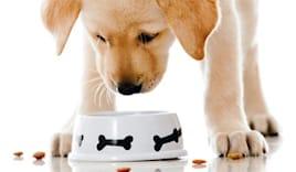 3x2 scatolette per cani