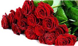 Mazzo 10 rose