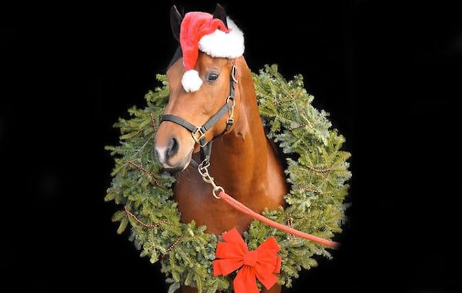 3-lezioni-equitazione_144483