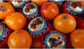 Arance tarocco di sicilia