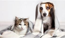 Accessori cane e gatto