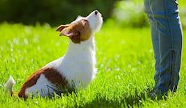 2 lezioni educazione cane