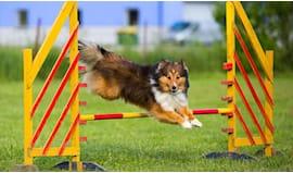 2 lezioni agility dog